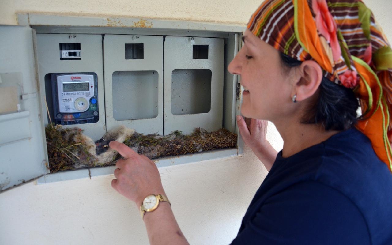 Ordulu kadının örnek duyarlılığı! Kuş elektrik saatine yuva yapınca elektriği kesti!