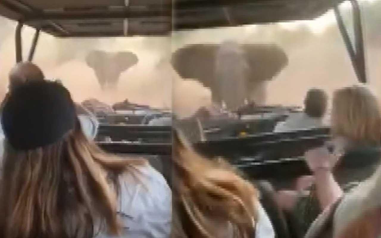 Korku dolu anlar! Fil turistleri taşıyan safari aracına saldırdı