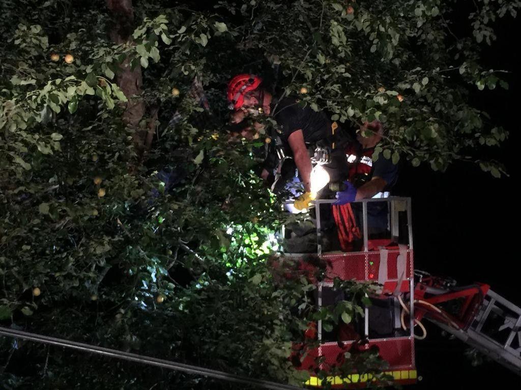 Rize'de ağaca çıkan talihsiz adam elektrik akımına kapılarak can verdi - Sayfa 3