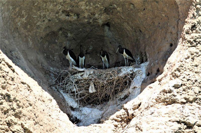 Elazığ'da yeni keşif kara leylek kanyonu adı verildi yöre halkı ilk kez gördü - Sayfa 3