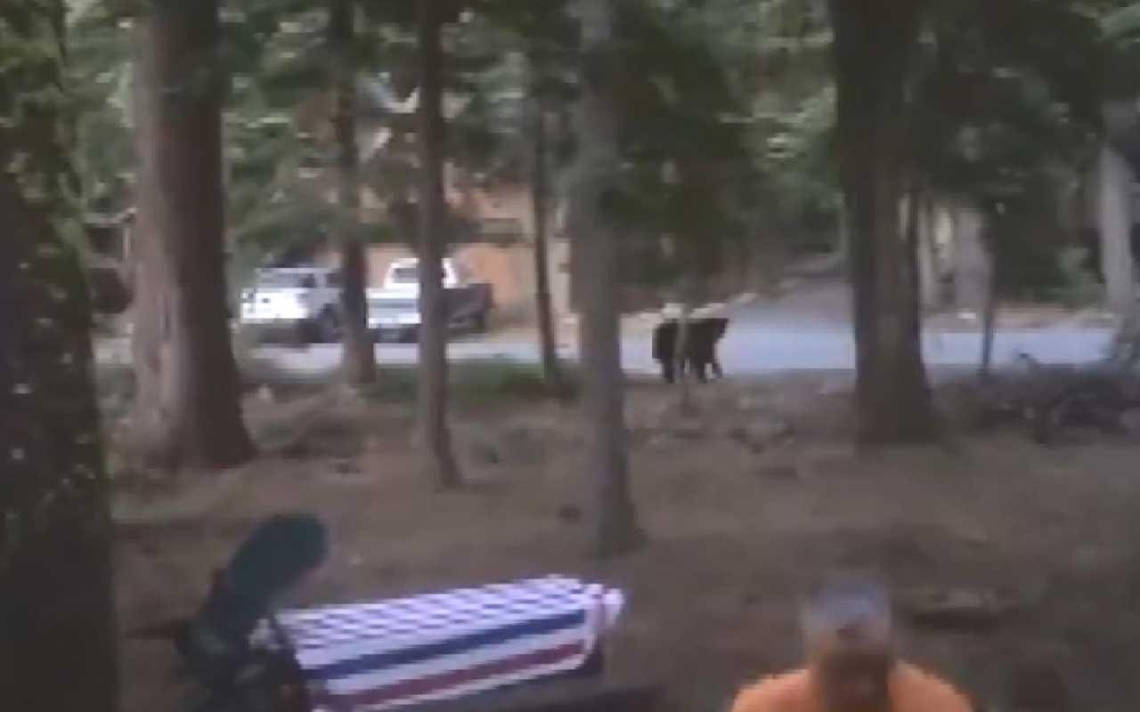 Aracında hırsız var sandı 'ayı' çıktı