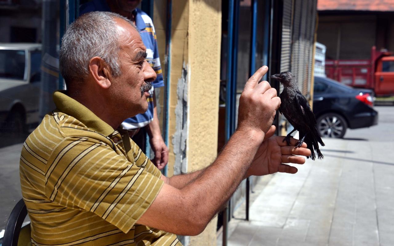 Erzurum'da kargayı kedinin elinden kurtardı! Şimdi yanından ayrılmıyor