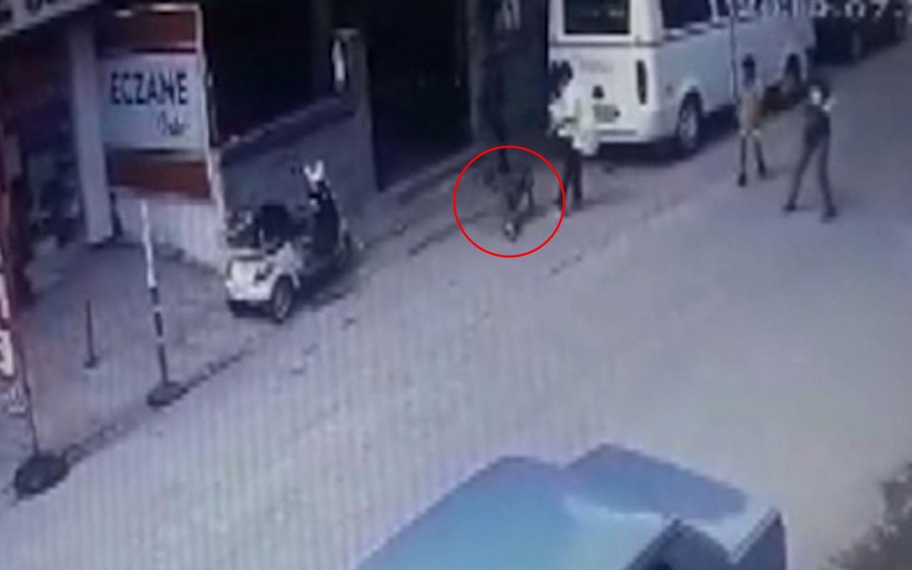 Adana'da gebe kediyi köpeğin önüne atarak parçalattılar