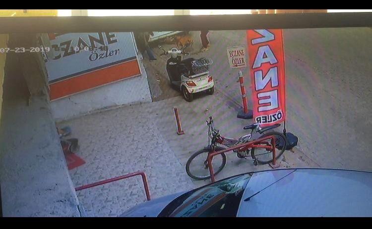 Adana'daki dehşet olay sonrası 'PitbullYasaklansın' etiketi TT oldu - Sayfa 2