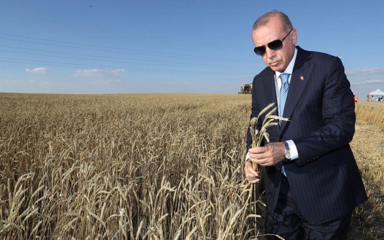 Cumhurbaşkanı Erdoğan, Hasat Bayramı'nda biçerdöver kullandı