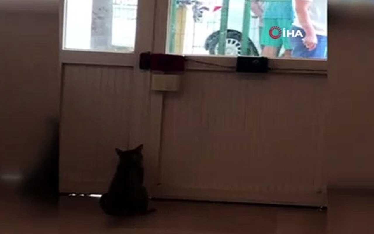 Kapıyı patisiyle açan sevimli kedi şaşırttı