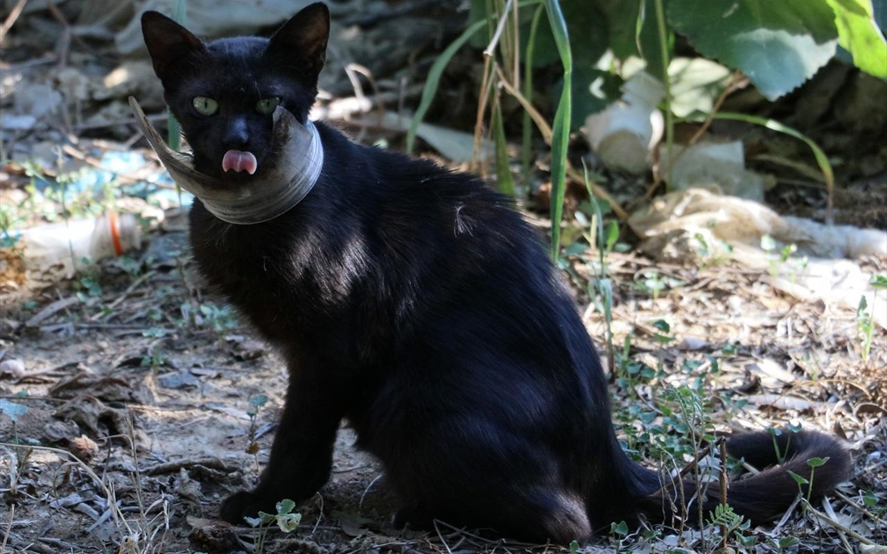 Hatay'da mangallı kedi kurtarma operasyonu