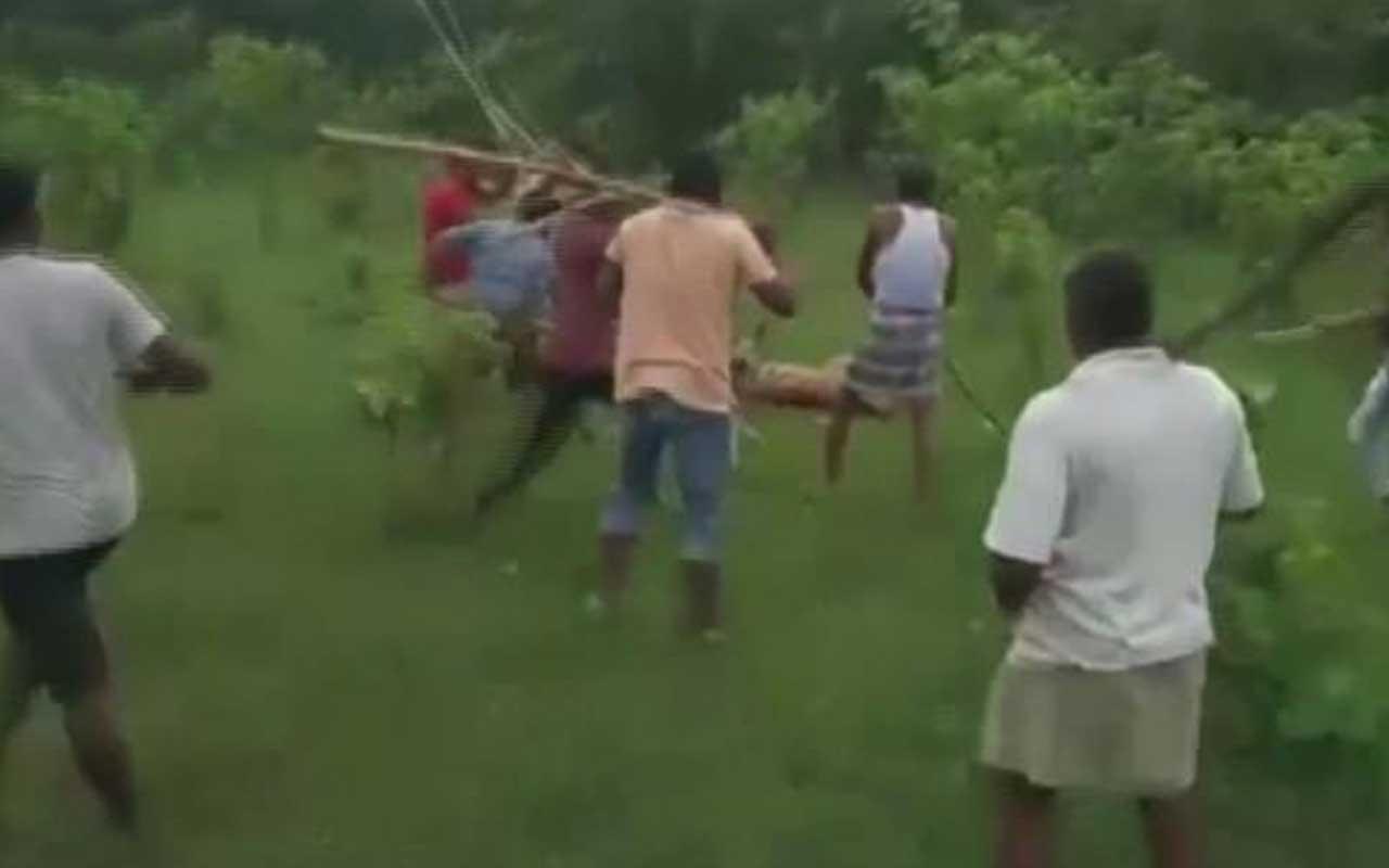 Hindistan'da vahşet! Kaplana öldüresiye dayak kamerada