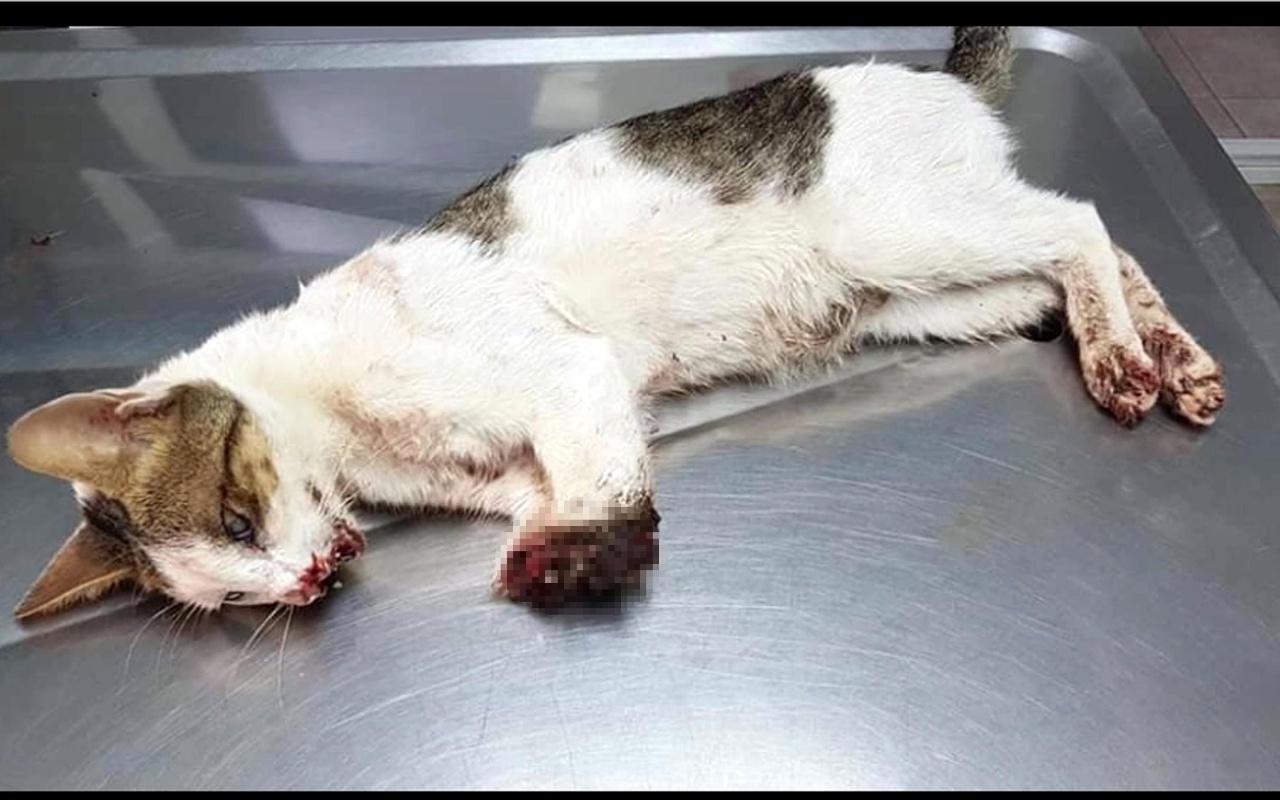 Marmaris'te dövülüp 2 bacağı kesilmiş halde bulunan kedi uyutuluyor!