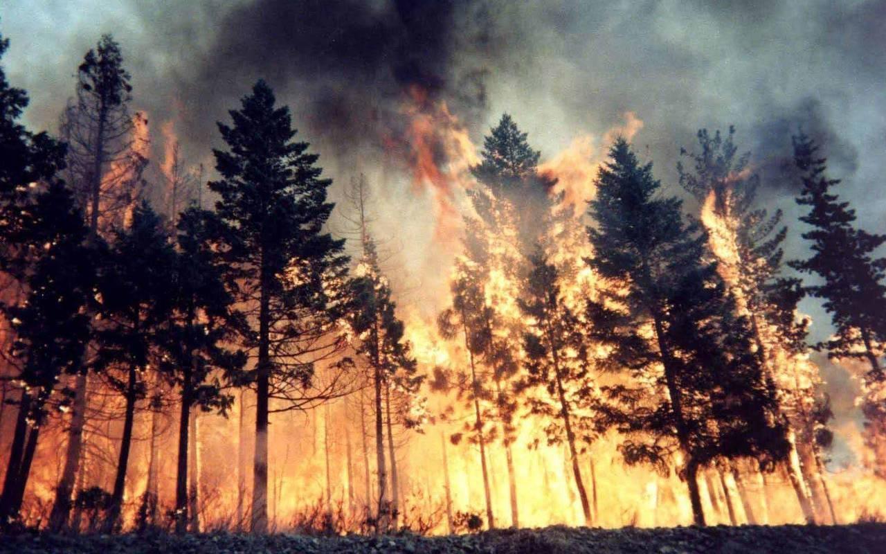 Rusya'da orman yangınları nedeniyle 5 bölgede acil durum ilan edildi