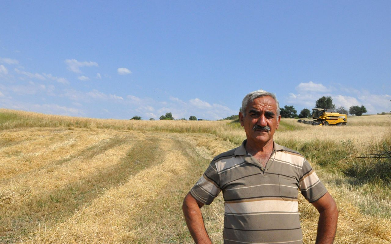 Kastamonu'da genetiği bozulmayan tek buğday türü siyezin hasadı başladı