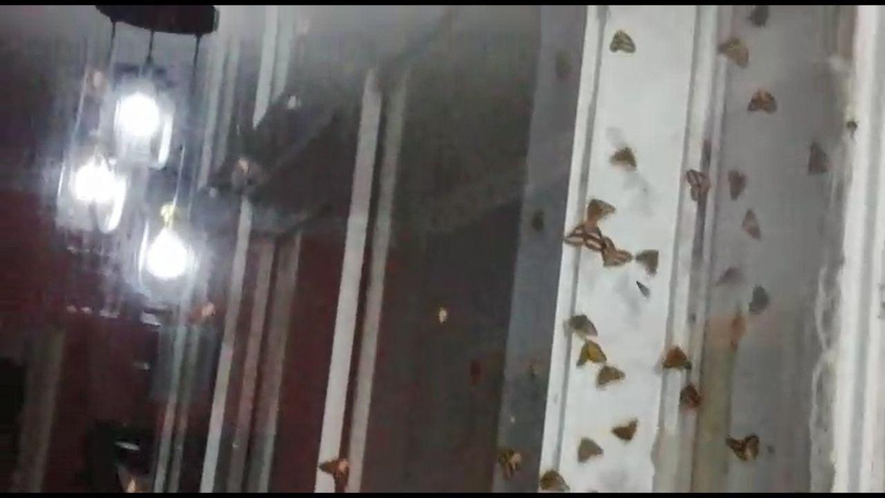 Rize'de vampir kelebek paniği İnsanın üzerine yapışıyorlar ısırıyorlar - Sayfa 4