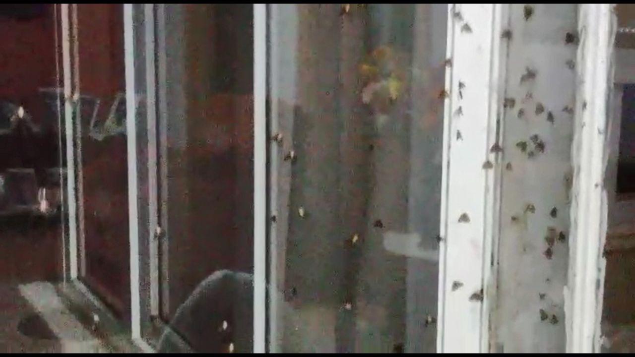 Rize'de vampir kelebek paniği İnsanın üzerine yapışıyorlar ısırıyorlar - Sayfa 6