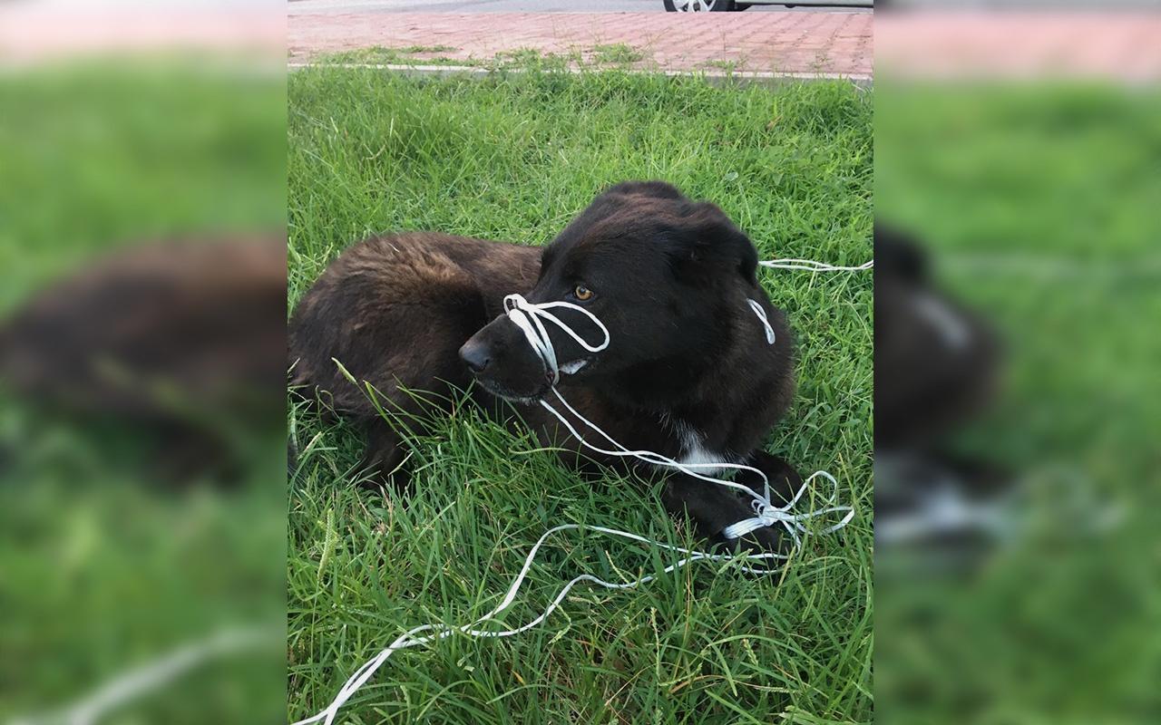 Antalya'da köpeğin ayağını ve ağzını bağlayıp ölüme terk ettiler