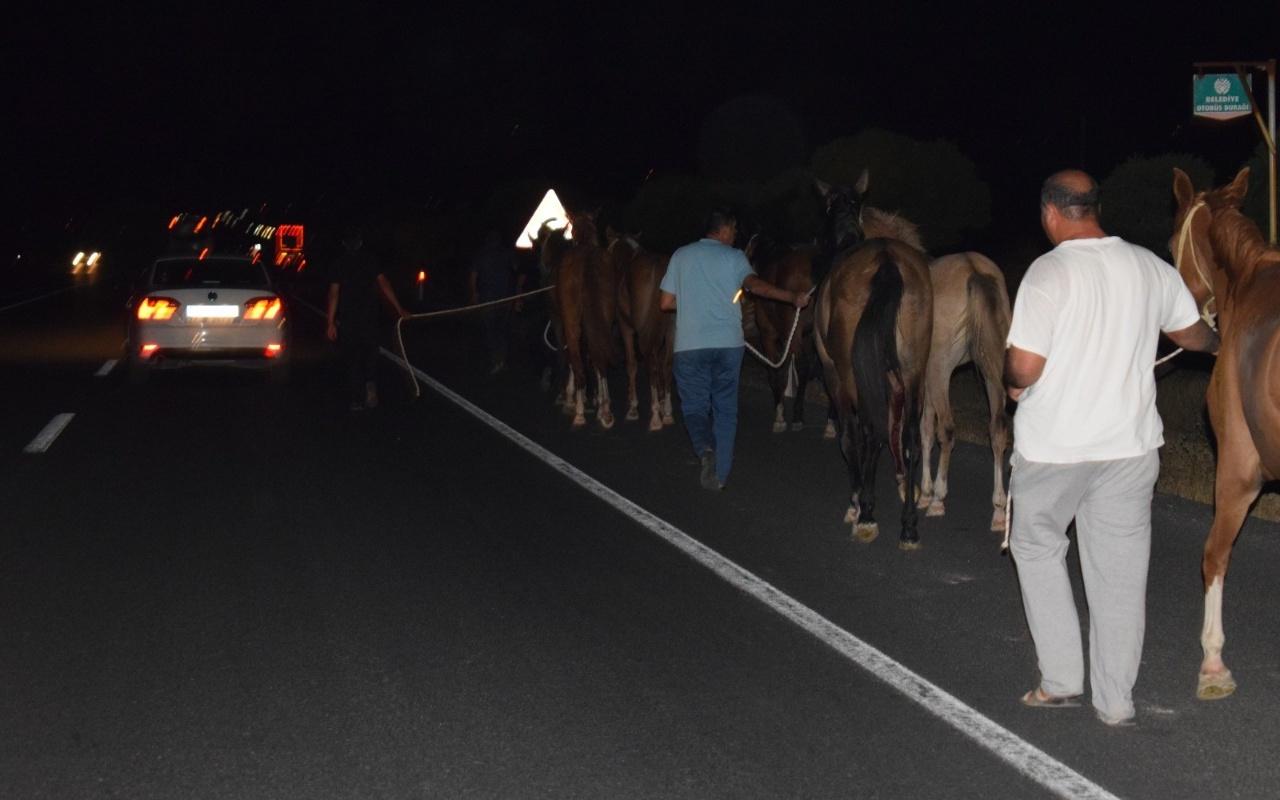 Malatya'da çiftlikten kaçan onlarca yarış atı otoyolu birbirine kattı
