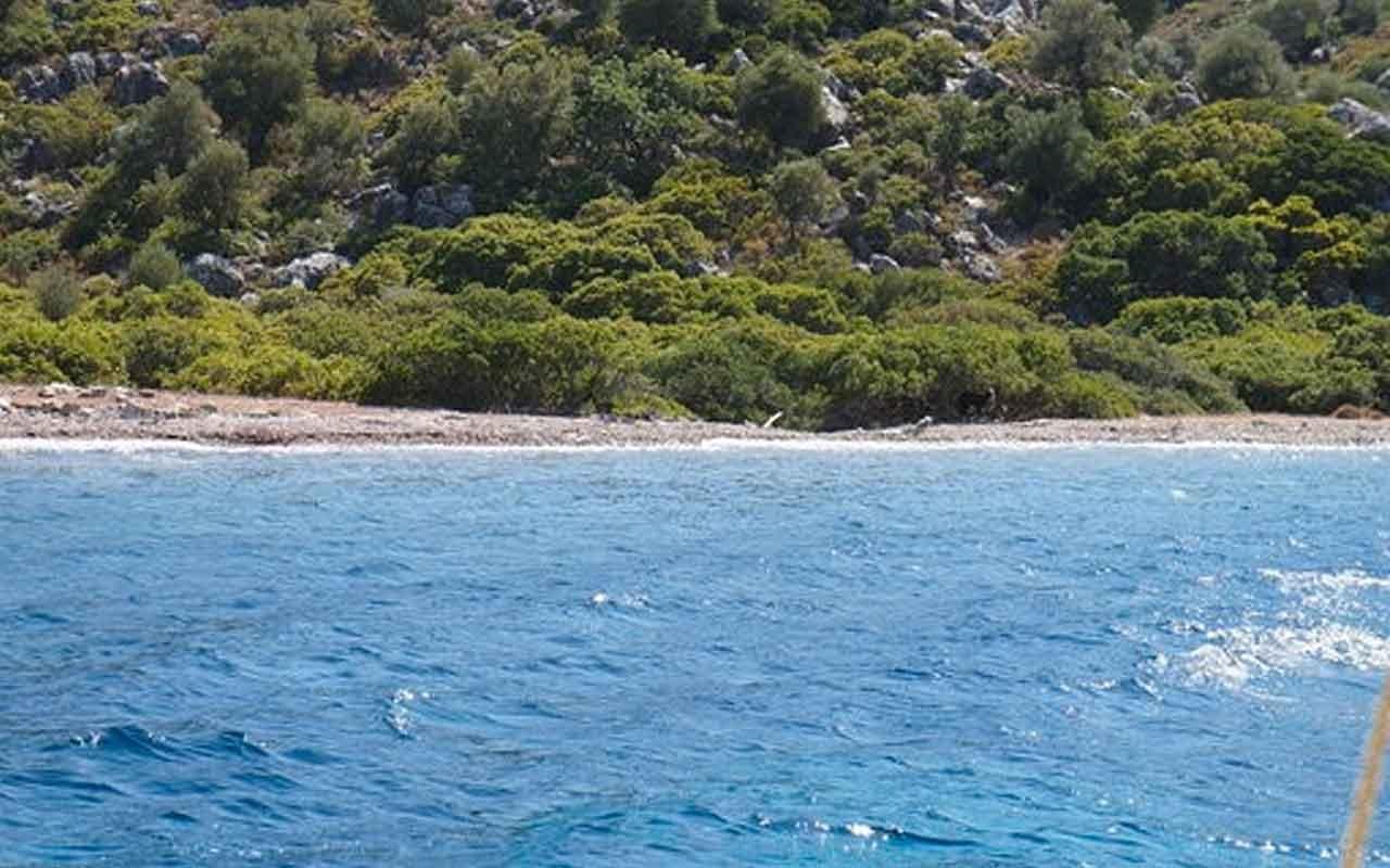 Marmaris'te hayvanseverler adadaki eşek için seferber oldular