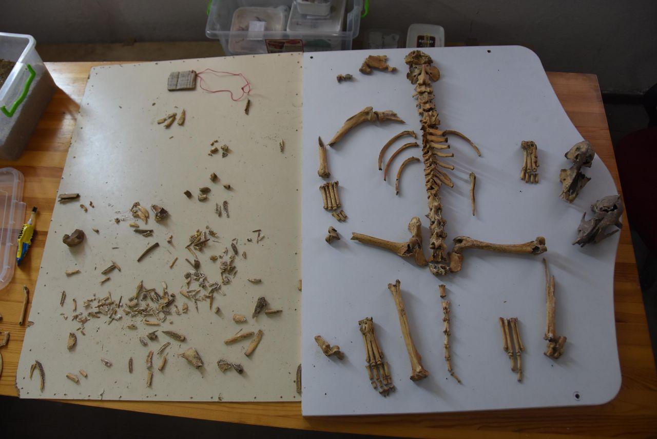 Eskişehir'deki kazılarda şaşırtan buluntu! Meğer 5 bin yıl önce... - Sayfa 7