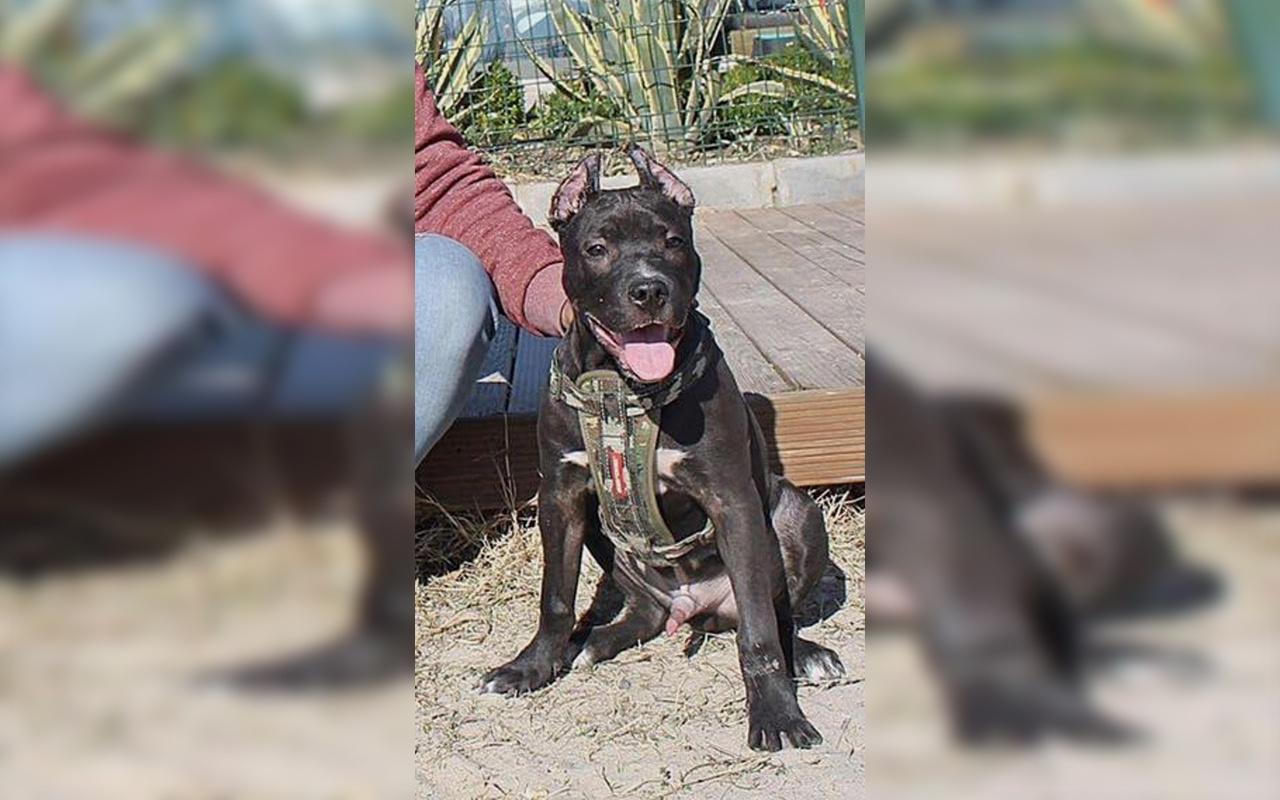 Aydın'da sahibine saldıran köpeği polis vurarak etkisiz hale getirdi