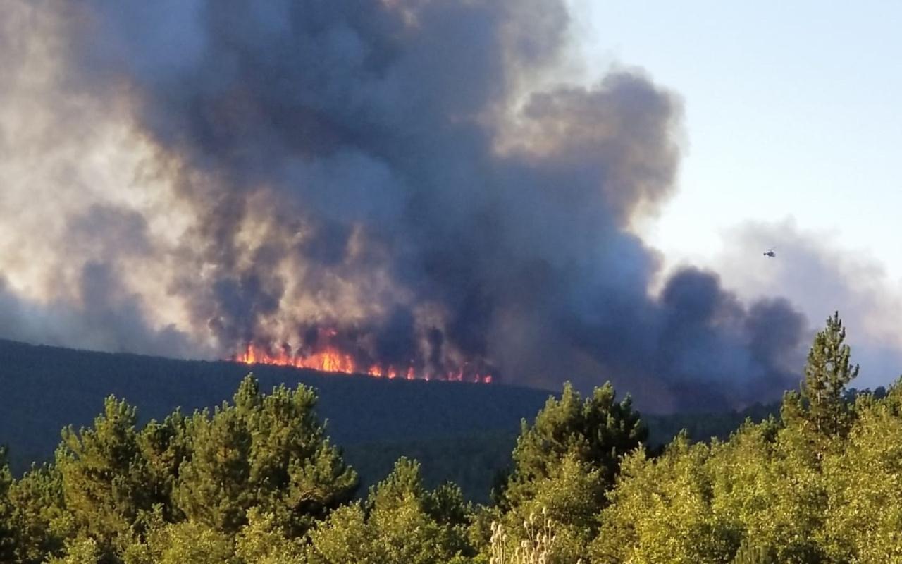 Kütahya Tavşanlı'da orman yangını