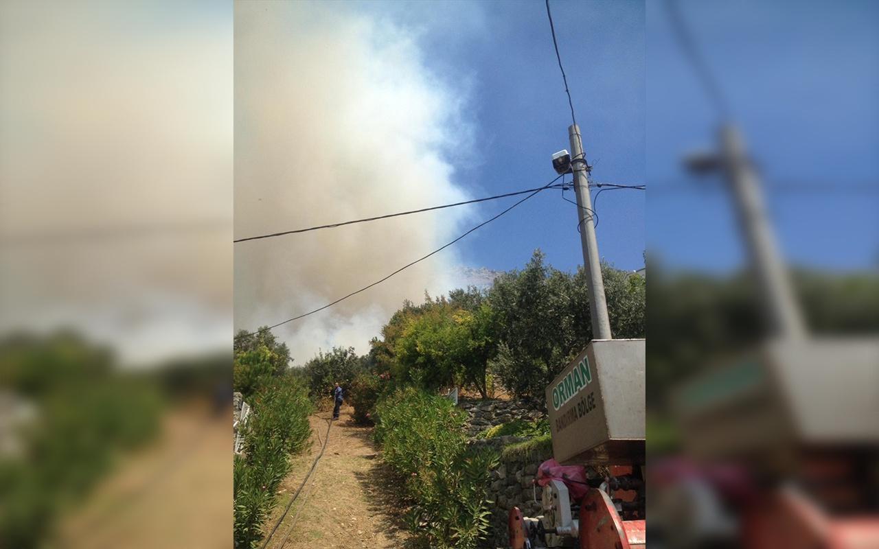 Balıkesir Marmara Adası'nda orman yangını
