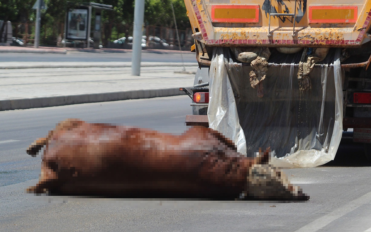 Antalya'da TIR'dan caddeye kurban atıkları döküldü