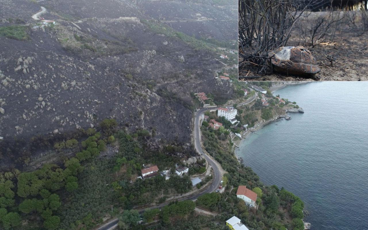 Marmara Adasındaki yangın 10 saatte kontrol altına alınabildi! 80 hektar..