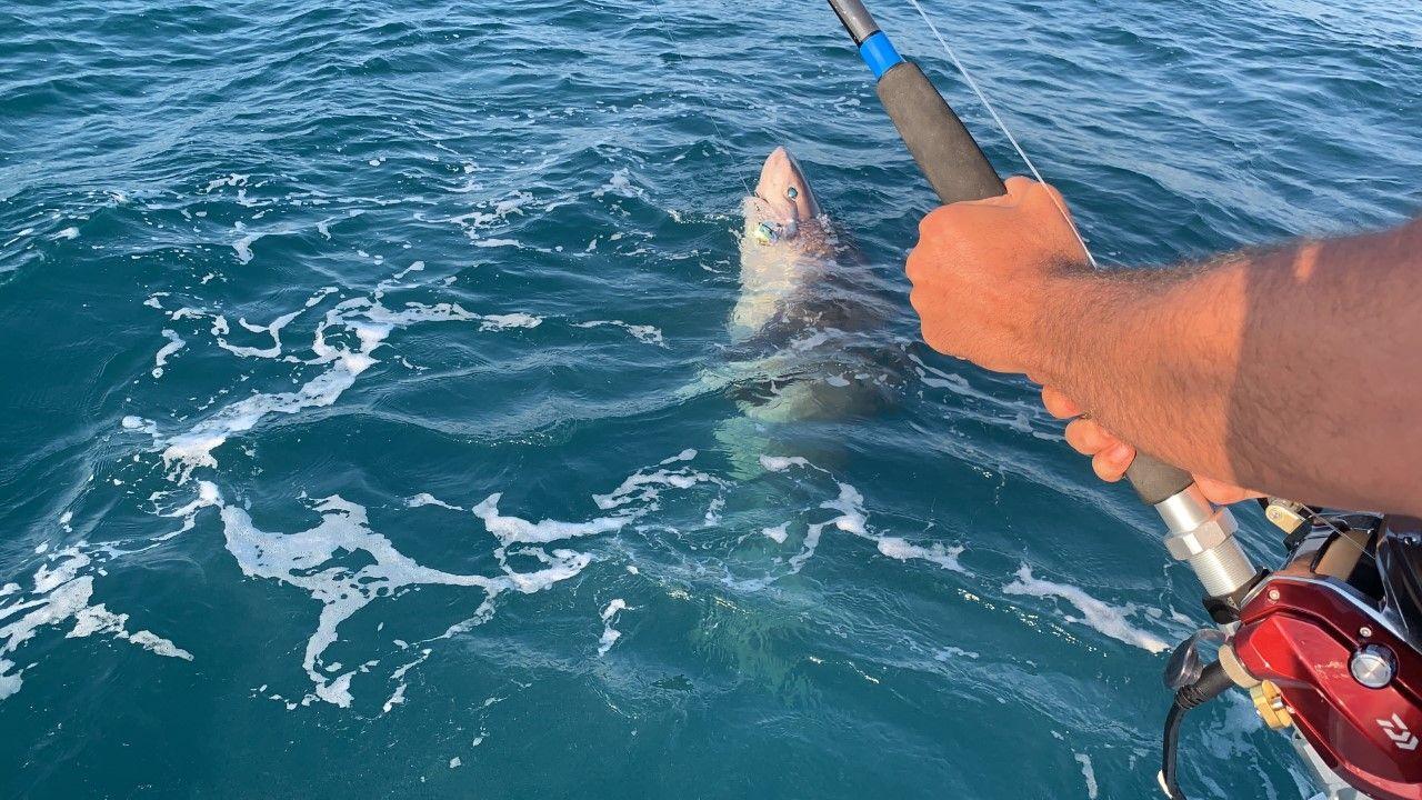 Çanakkale'de amatör balıkçıların oltasına 4 metre uzunluğunda köpek balığı takıldı