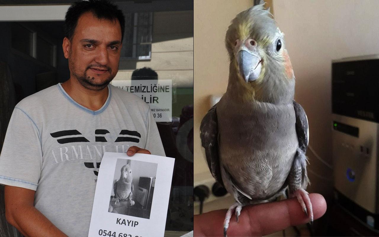Gaziantep'de 5 yıl beslediği kafesinden kaçan papağınını arıyor!