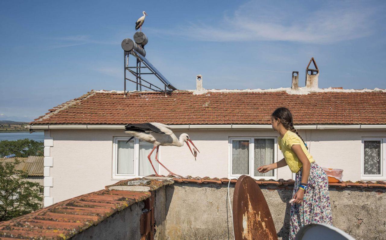 Bursa'da 12 yaşındaki Beyzanur'un leyleklerle dostluğu şaşırtıyor!