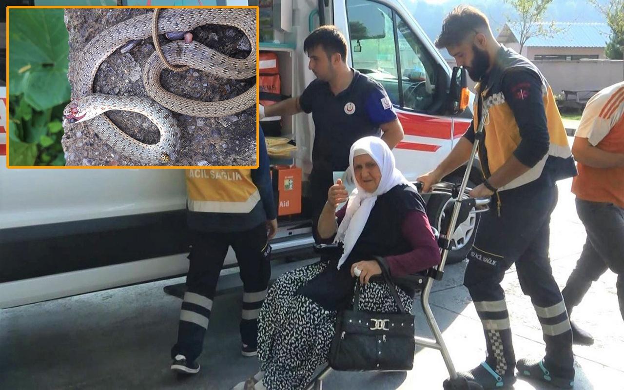 Zonguldak'ta yaşlı kadını çamaşır asarken yılan soktu