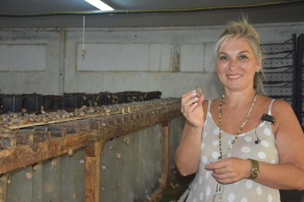 Türkiye'nin kuluçkahaneli ilk salyangoz merkezi İzmir'de! Tüm dünyaya ihraç ediliyor