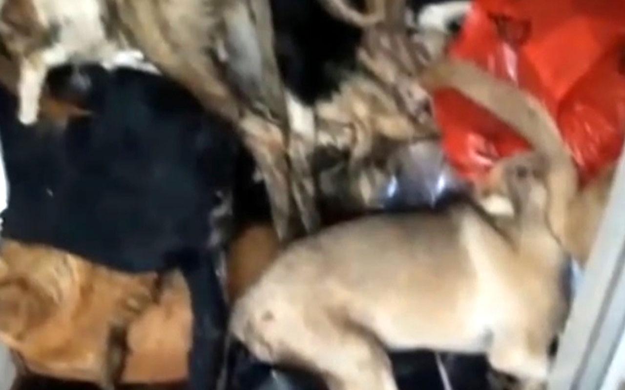 Antalya'da hayvanlar ölüme terk ediliyor iddiası! Tepkiler büyüyor