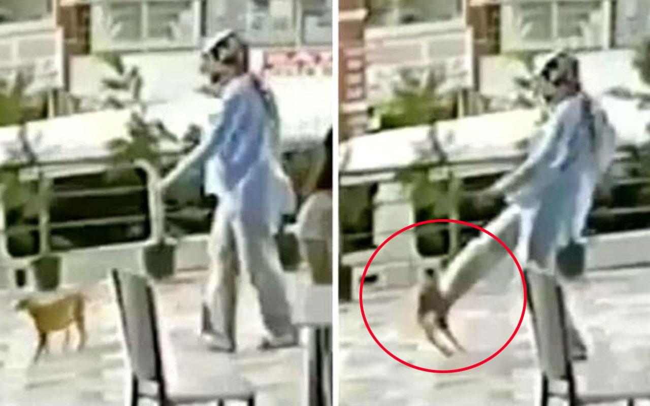 Silivri'de çiğ köfteci kadın kediye tekme atarak savurdu! Tepkiler çığ gibi