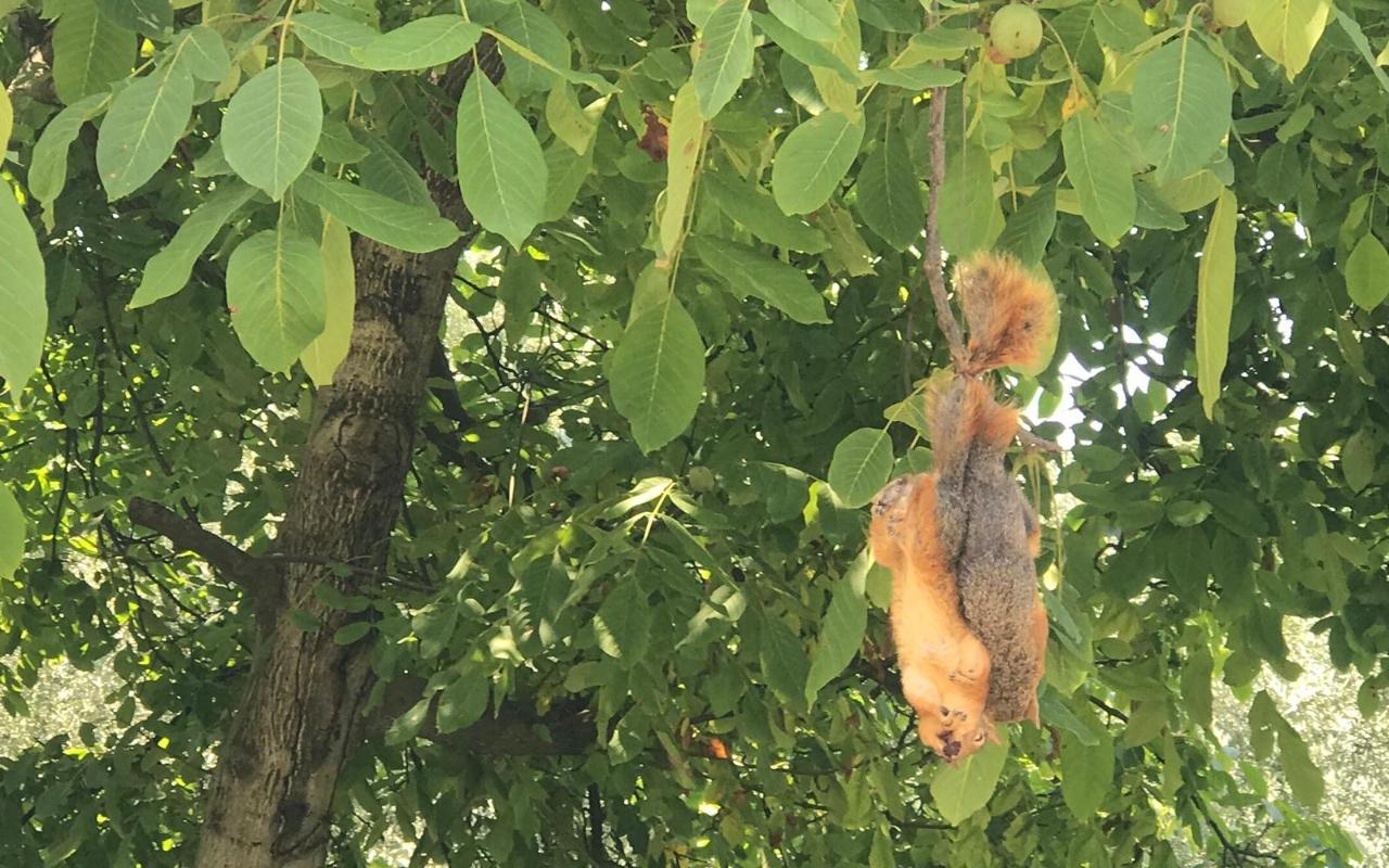 Bursa'da vahşet! Öldürüp ağaca astılar