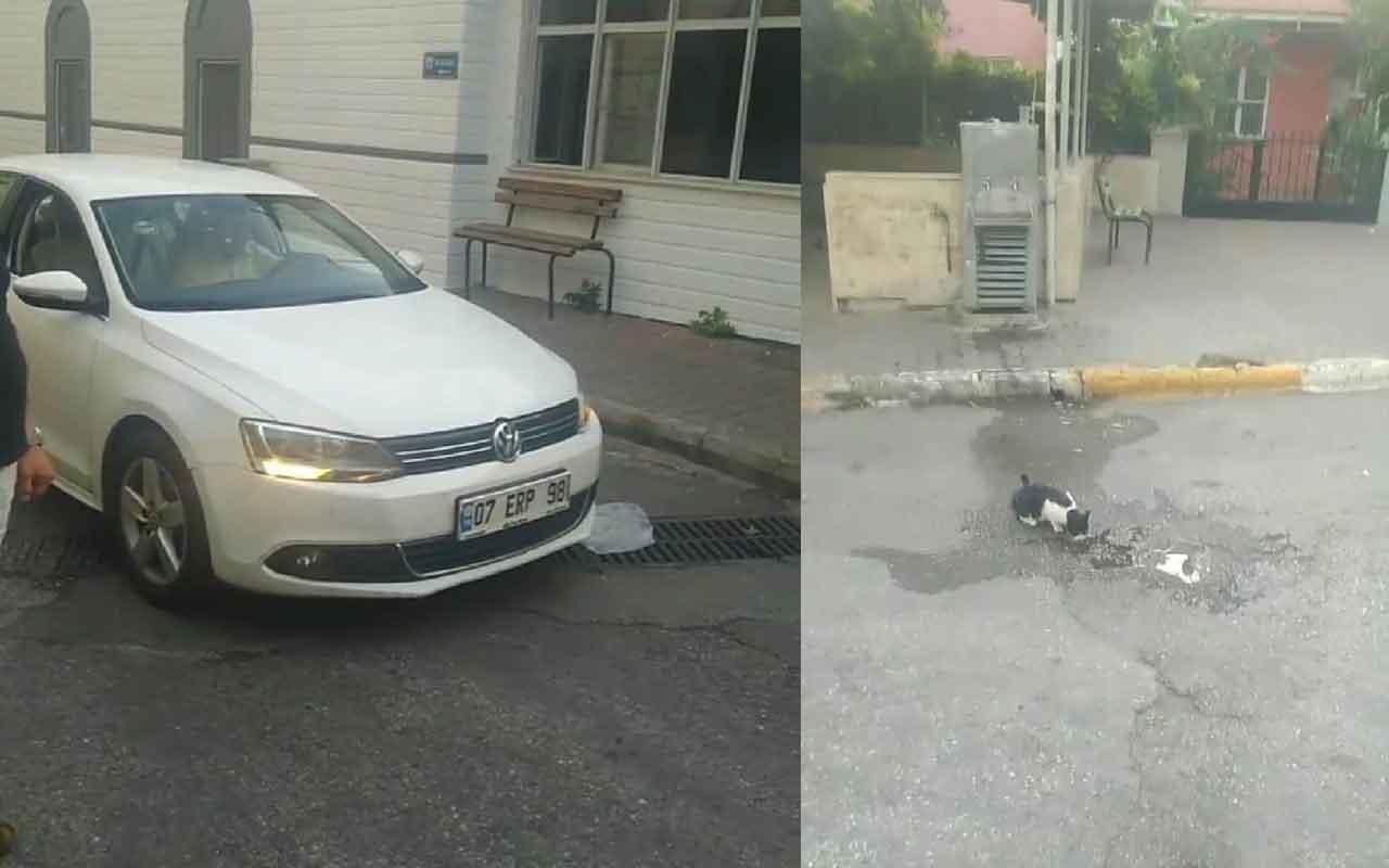 Antalya'da su içen kediyi gören sürücü davranışıyla herkesin takdirini kazandı
