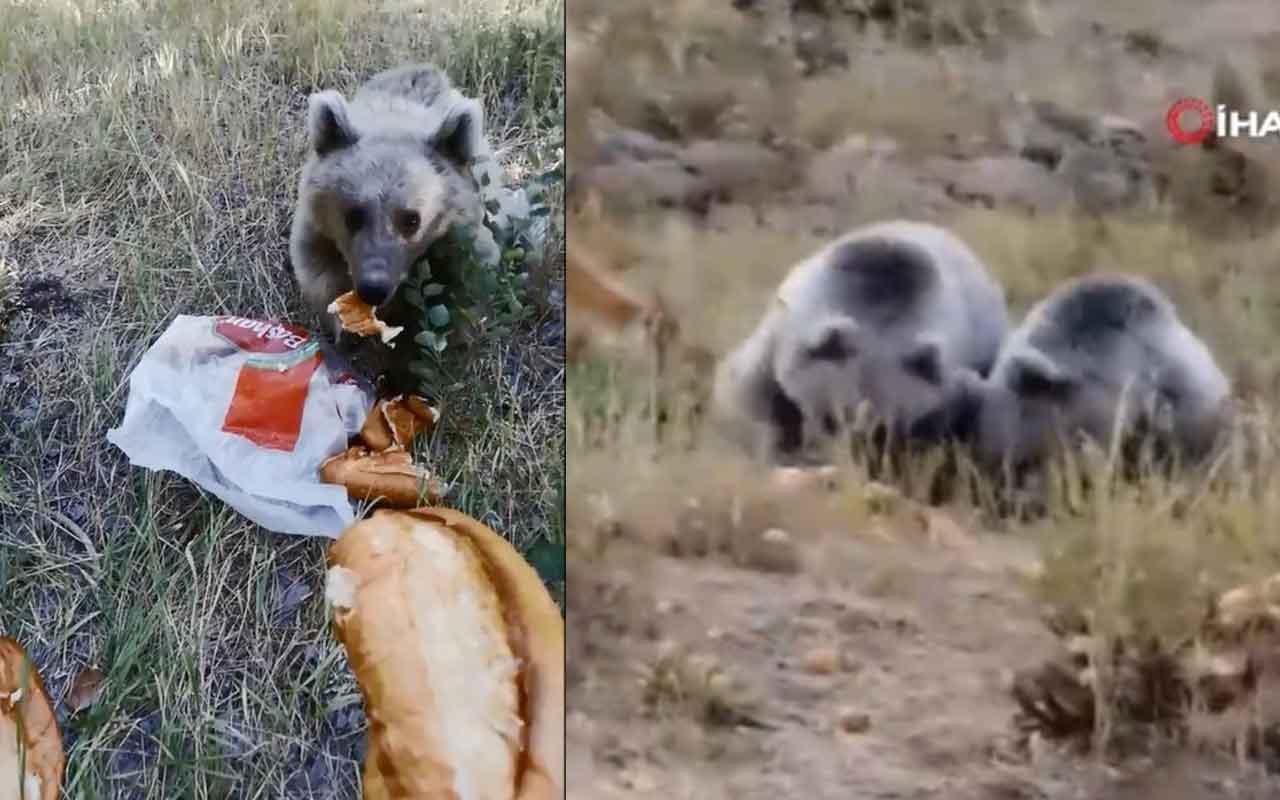 Bitlis'te vatandaşlar yavru ayıları kendi elleriyle böyle besliyor