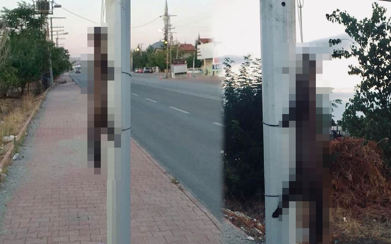 Konya'da akılalmaz vahşet! Öldürüp direğe astılar