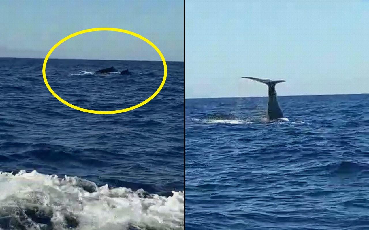 İzmir Çeşme açıklarında görülen balina ve yavrusu şaşırttı