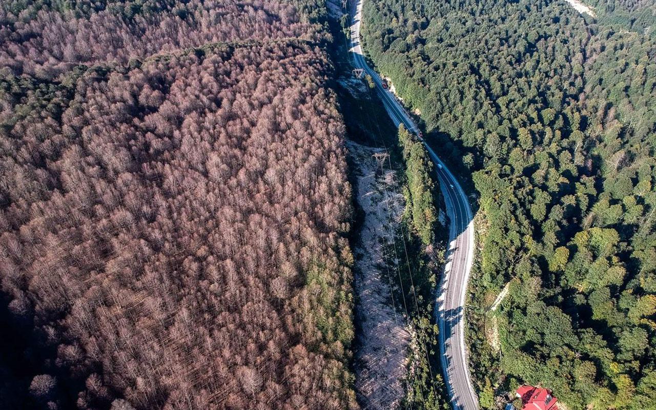 TEMA Vakfı ağaçlandırma kampanyalarına karşı uyarıyor: Her yere ağaç dikilmez
