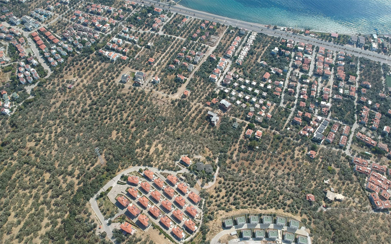 Kaz Dağları yakınında villa yapımı için 2,5 milyon zeytin ağacı kesildi