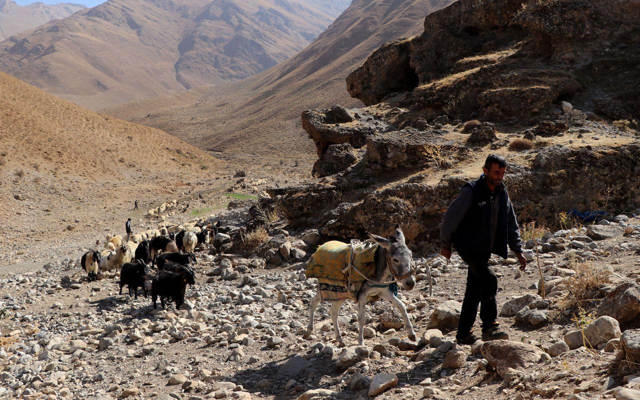 Van ve Hakkari'den dönüş başladı yolculuk koyunlarla birlikte 1 ay sürecek