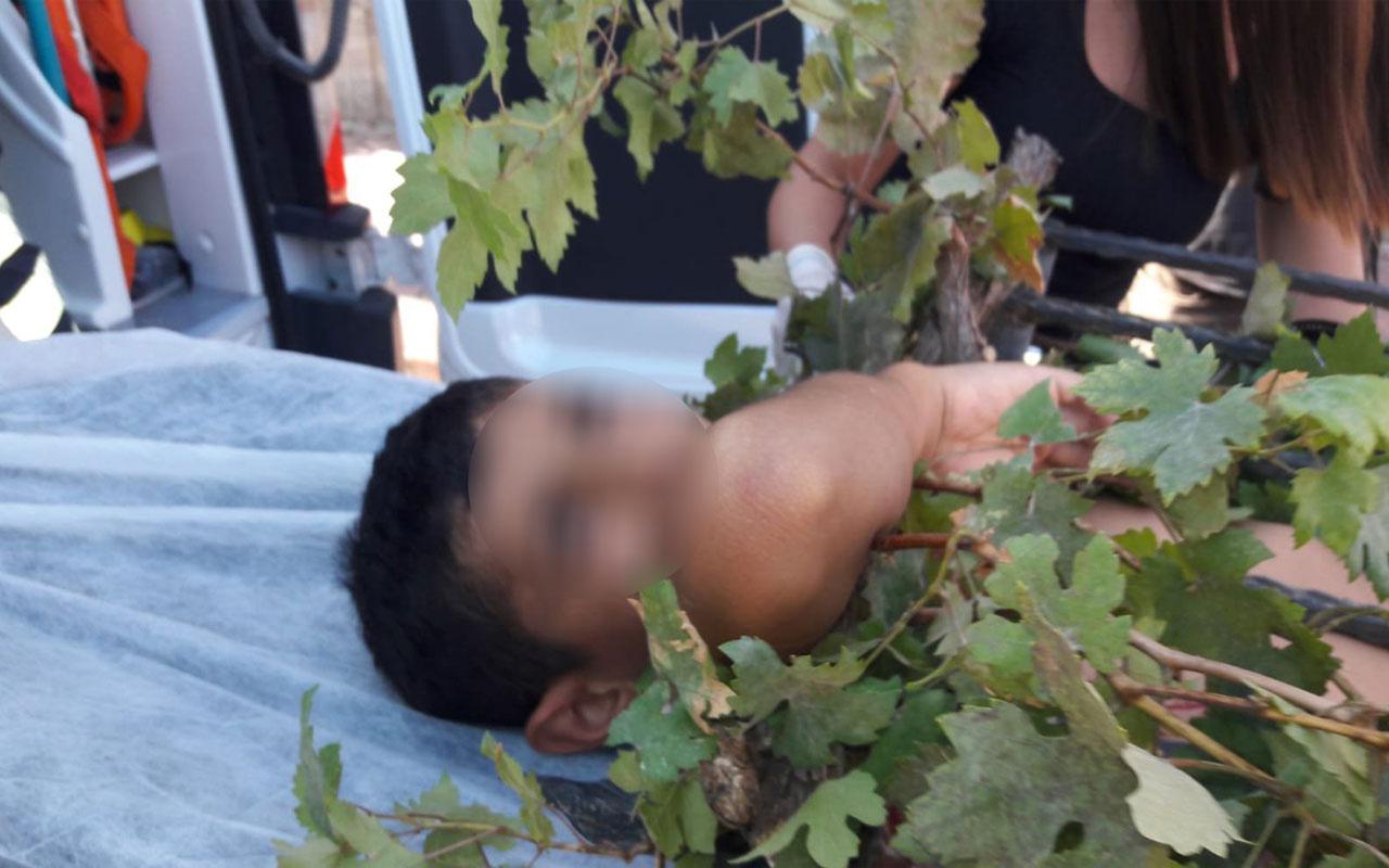 Meyve toplarken ağaçtan düşen çocuğun koluna demir korkuluk saplandı