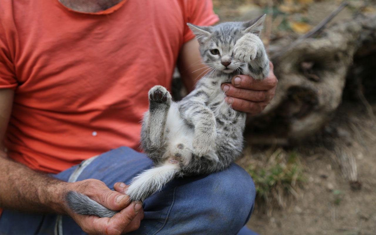 Üç ayaklı kedi mahalle sakinlerinin ilgi odağı haline geldi