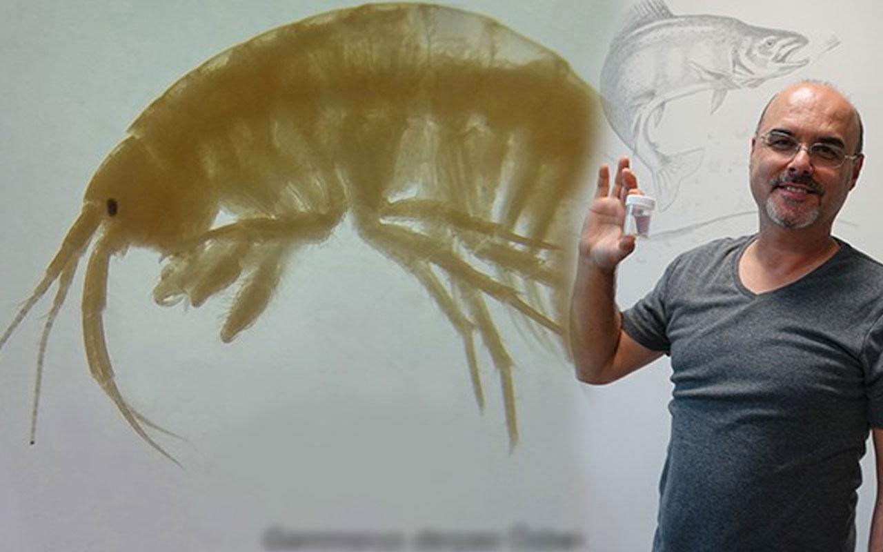 Türk bilim insanları iki yeni canlı türü keşfetti