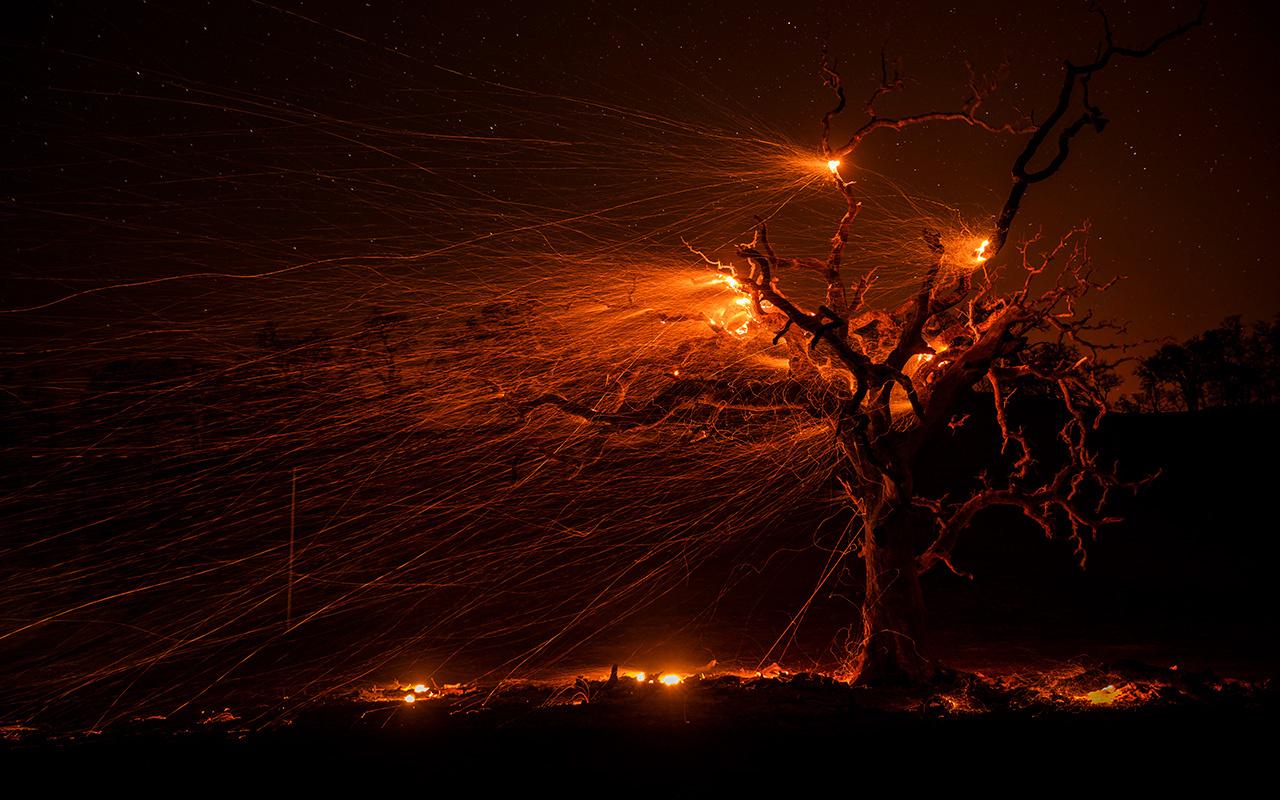 ABD Kaliforniya orman yangınlarıyla mücadele ediyor