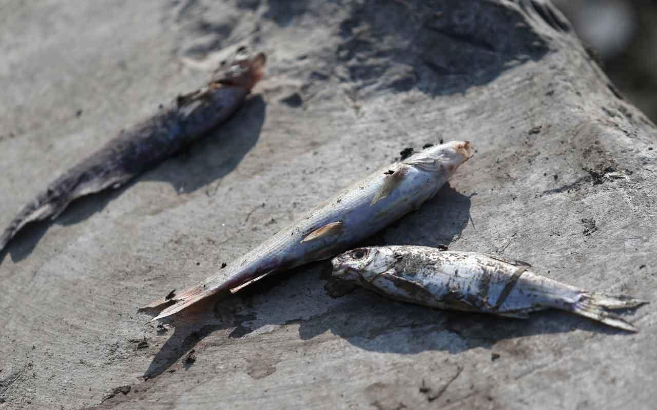 Bursa'da çevre felaketi binlerce balık ölü bulundu