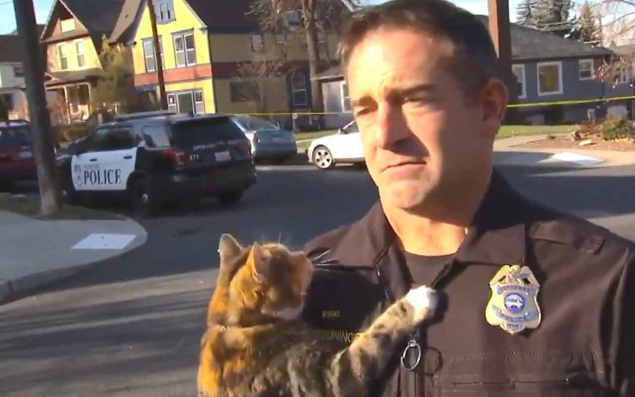 Kedi röportaj sırasında polisin üzerine böyle atladı