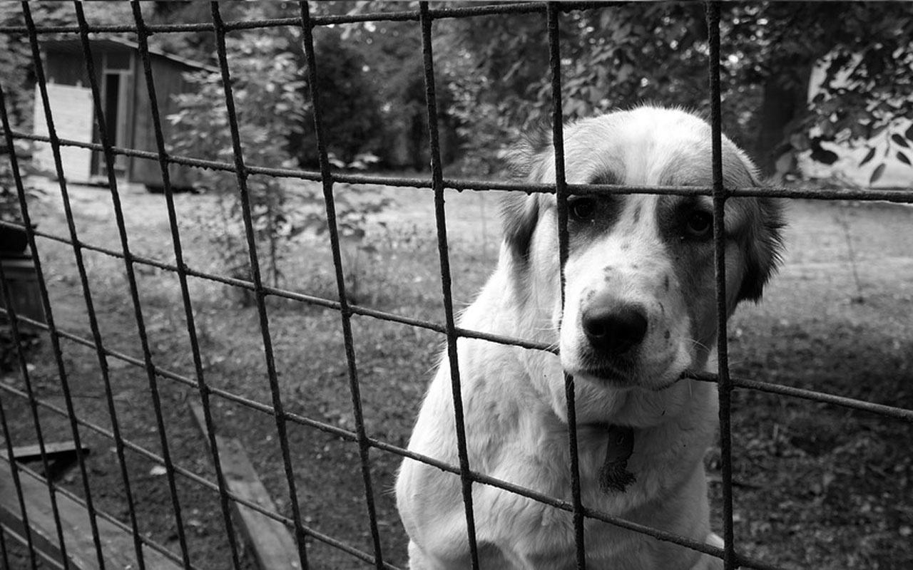 Hayvanını terk edene 10 bin TL ceza kötü mualemeye 2 yıl hapis