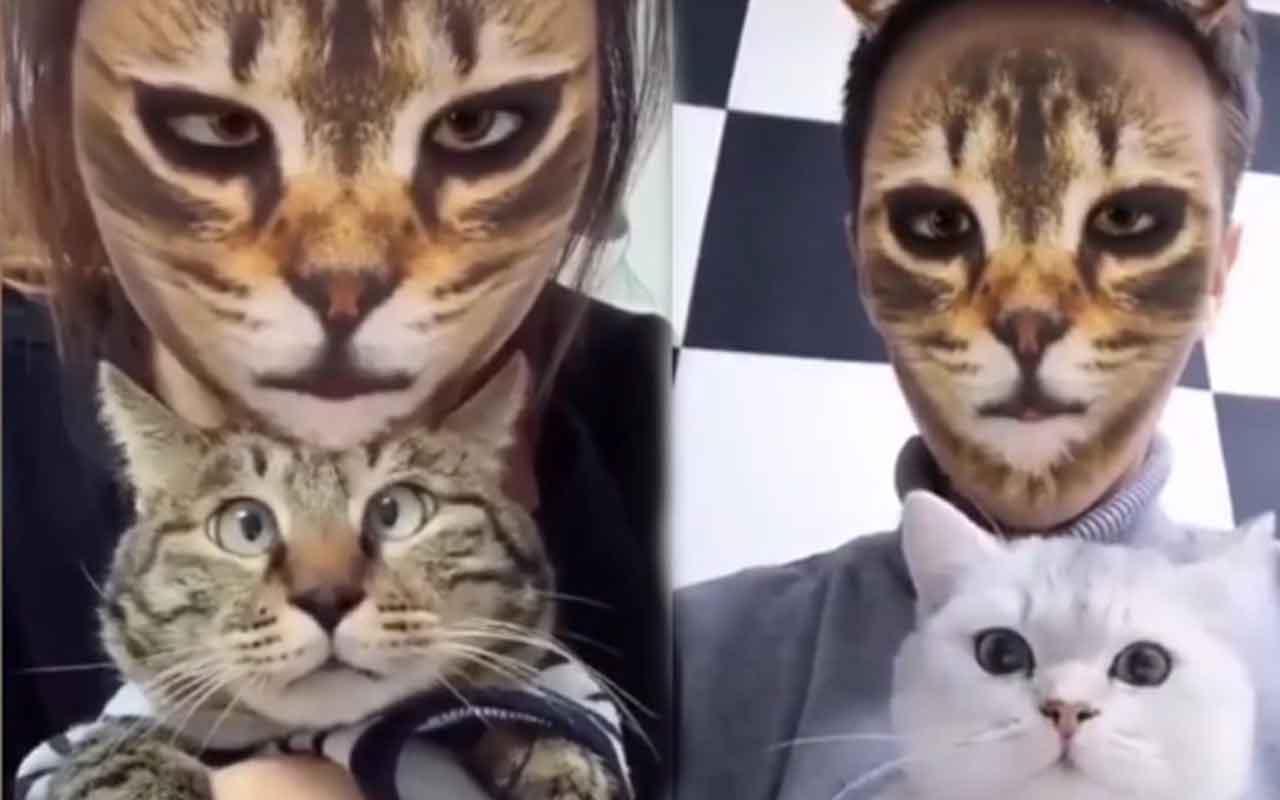Kedilerin yüz filtrelerine verdikleri ilginç tepkiler!
