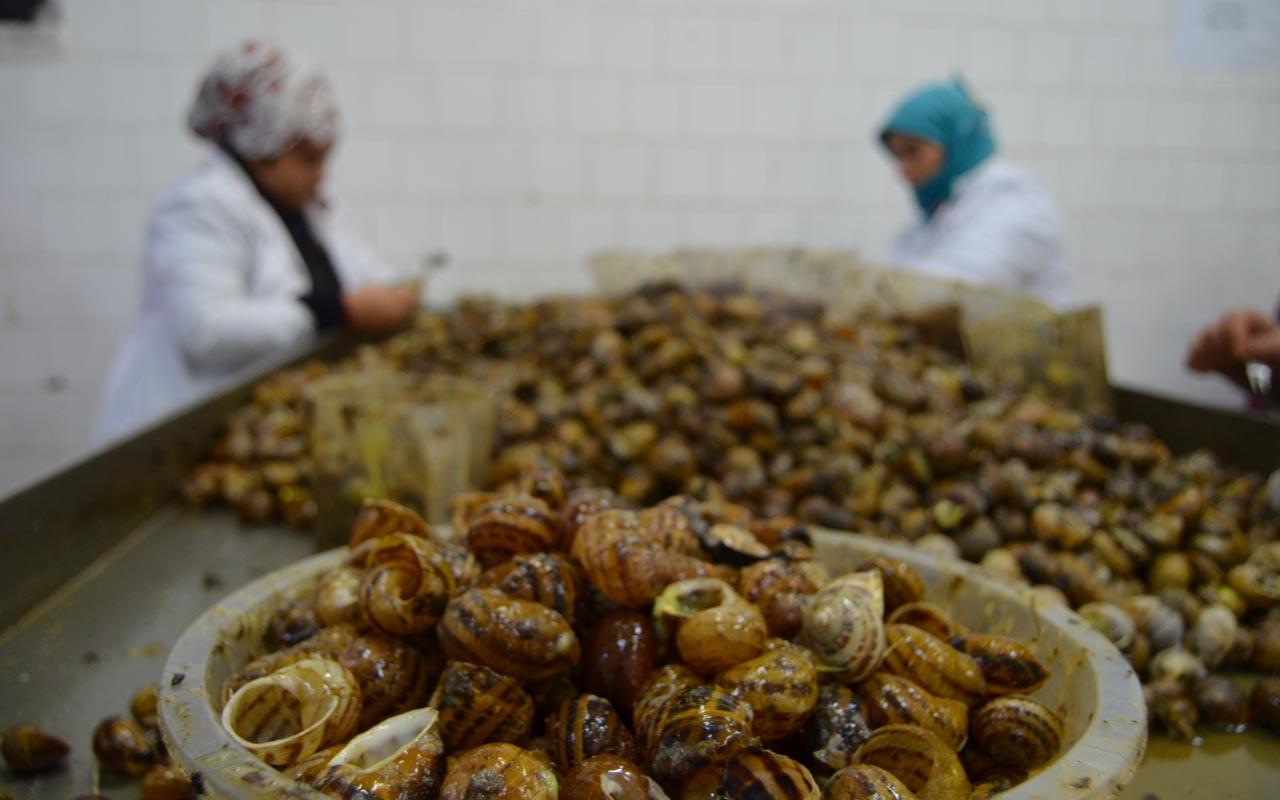 Aydın'dan salyangoz ihracatıyla 2 milyon dolar gelir sağlanıyor